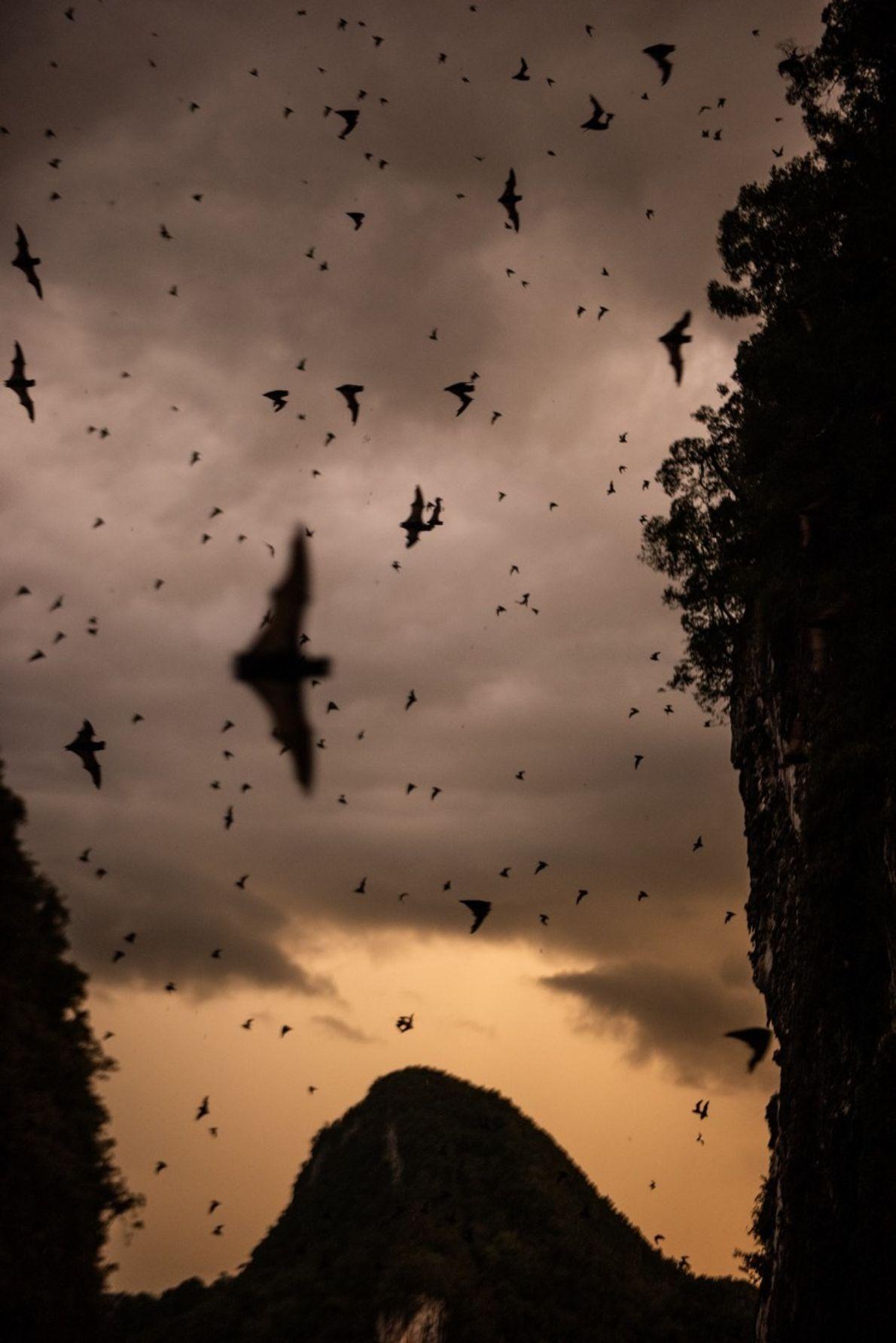 La cueva Deer de Borneo alberga más de dos millones de murciélagos de diversas especies, que ...
