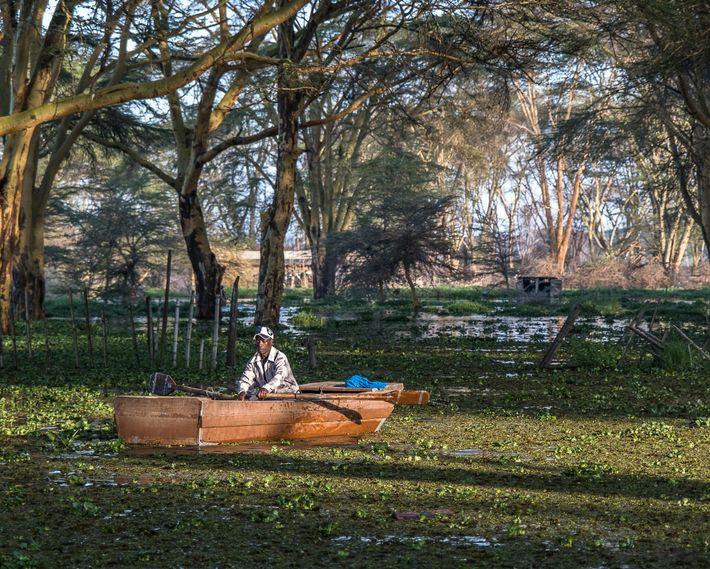 Un pescador regresa con su pesca matutina. La crecida del río ha dejado bajo el agua ...