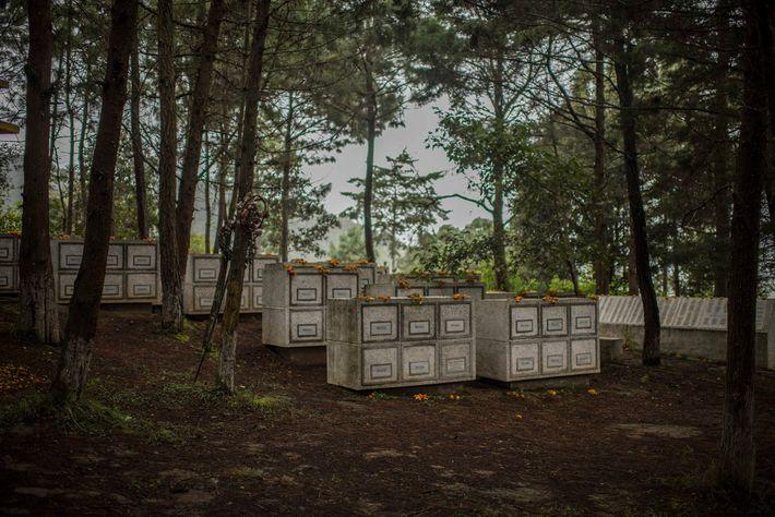 Las flores adornan las tumbas de las víctimas sin identificar del conflicto guatemalteco. El 1 de ...