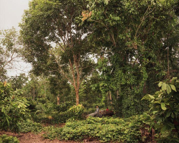 baixa-verde-producers