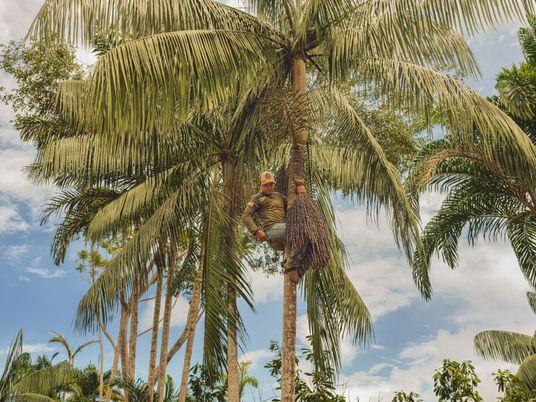 Una comunidad brasileña demuestra que la agricultura en la Amazonía puede ser no destructiva