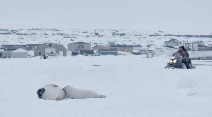 harp-seals-and-snowmobile