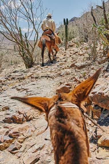 """Ignacio """"Nacho"""" Arce Arce recorre El Camino Real cerca del Rancho Aguajito de las Mujeres en ..."""