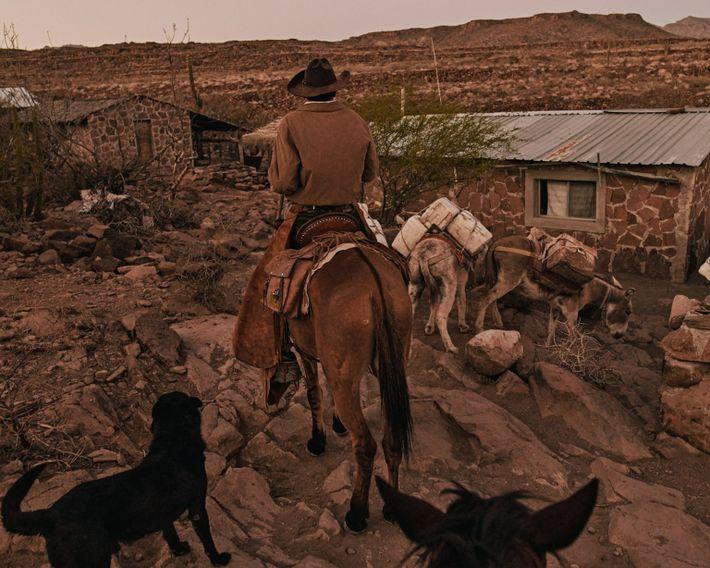 """Eleonary """"Nary""""  Arce Aguilar conduce sus mulas a casa en el Rancho Mesa San Esteban en ..."""