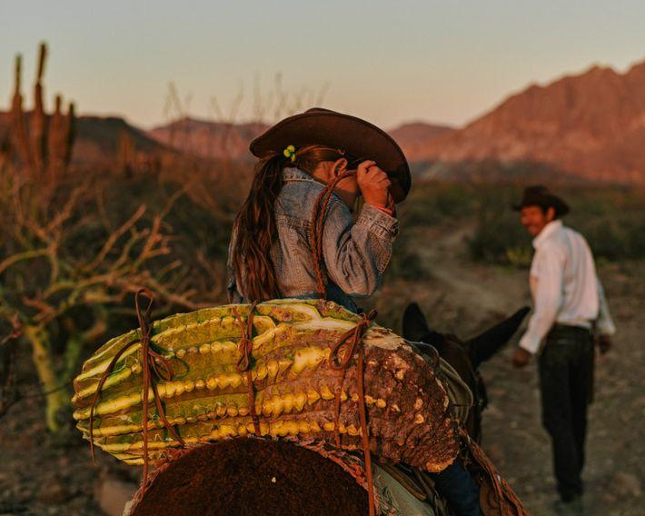 """Eleonary """"Nary"""" Arce Aguilar y su hija Guadalupe cosechan un cactus de barril para alimentar a ..."""