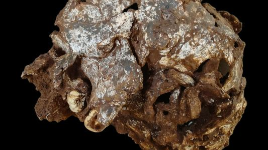 La tumba de un niño se convierte en el sepulcro humano más antiguo hallado en África