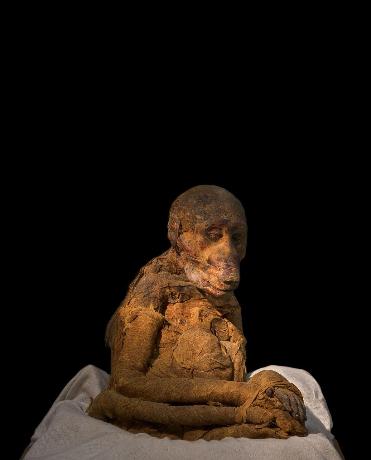 Este babuino contiene un secreto que ayuda a identificarlo como mascota: una radiografía reveló que le ...