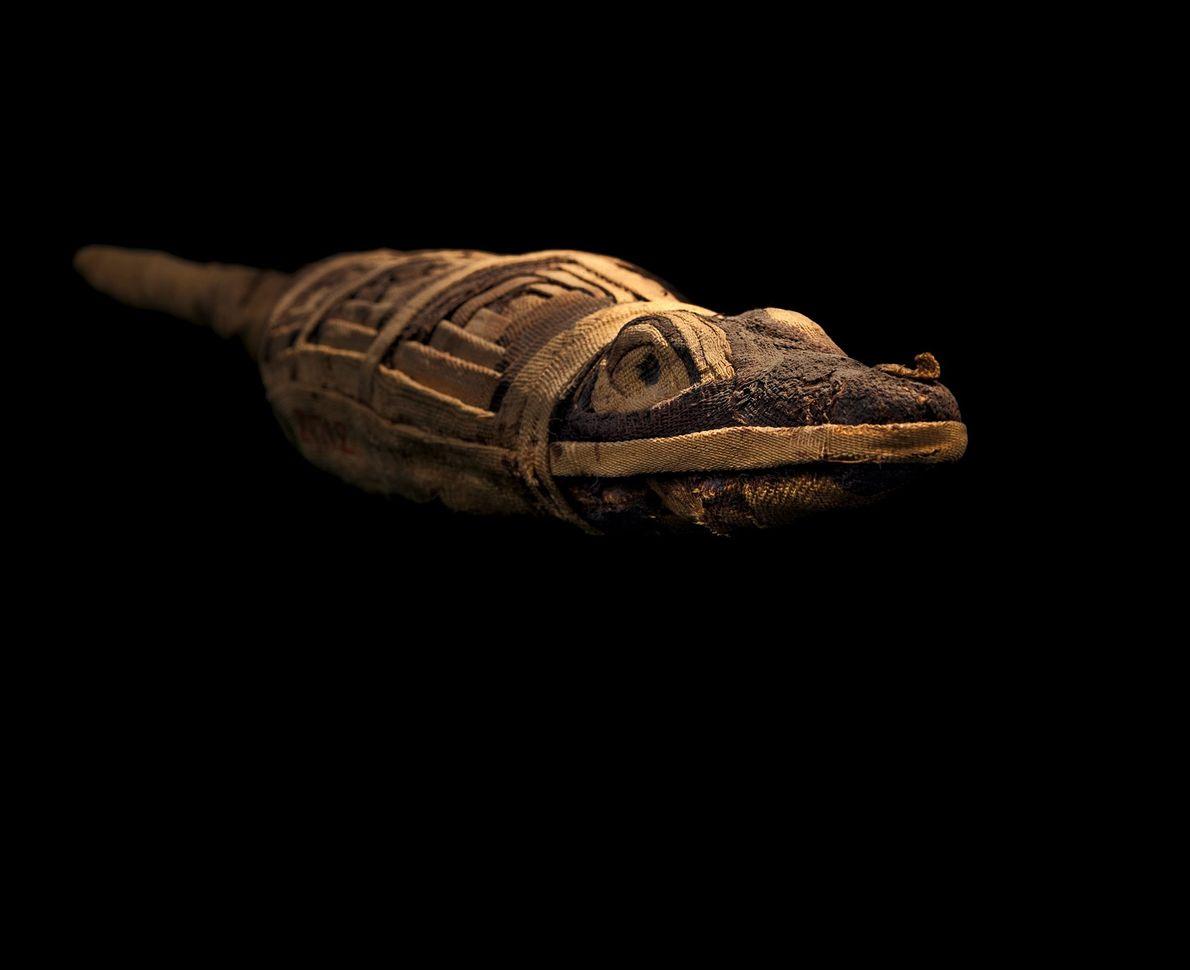 Las momias votivas, enterradas con una plegaria, son muy variadas, pero no siempre son lo que ...
