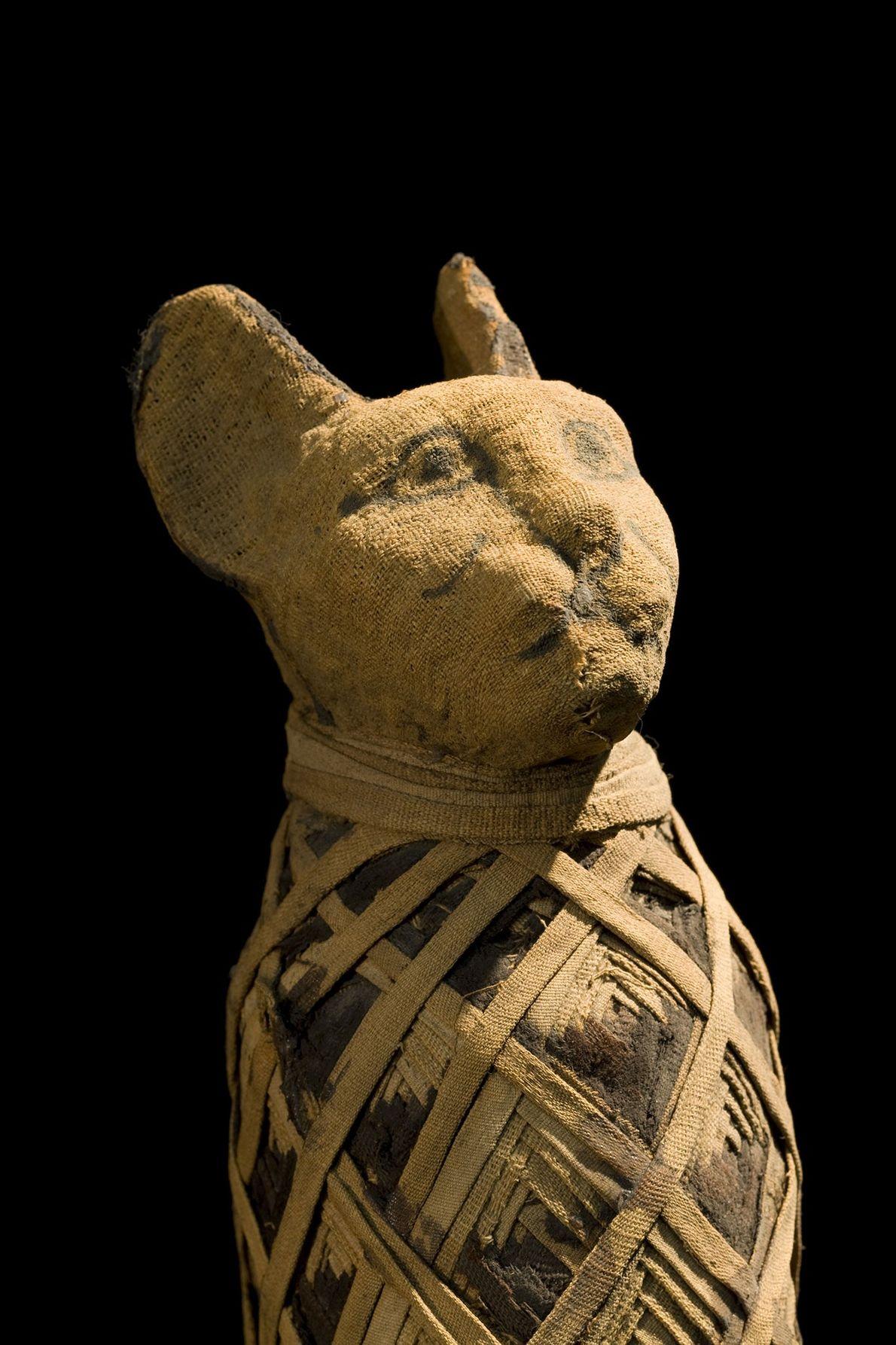 Las vendas dobladas parecen el collar de un gato, pero el animal que contienen estas envolturas ...