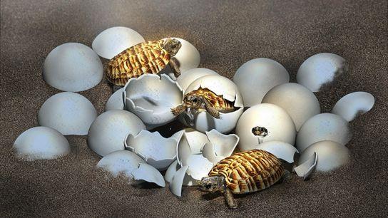 Un huevo fosilizado encontrado en China reveló una sorpresa en su interior: la cría de una ...