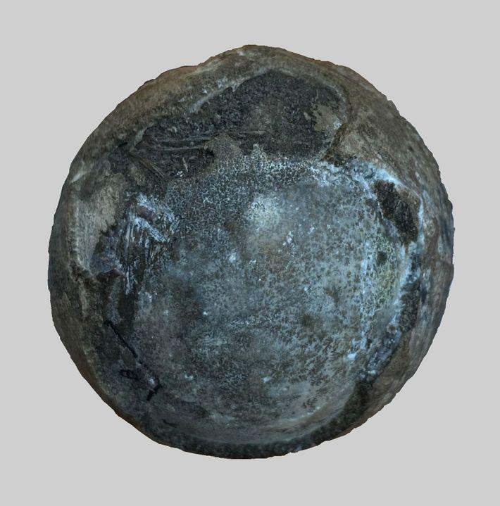 El huevo fosilizado del período Cretácico, que contiene un raro embrión de tortuga en su interior.