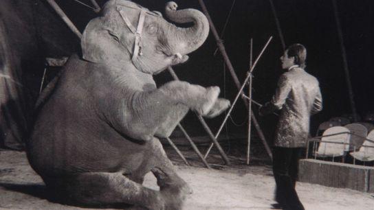 Mara-elefante-juventud1