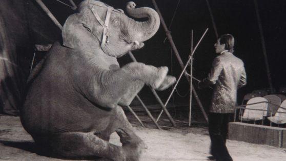 El traslado de la elefanta Mara durante la pandemia de COVID-19 – Parte III