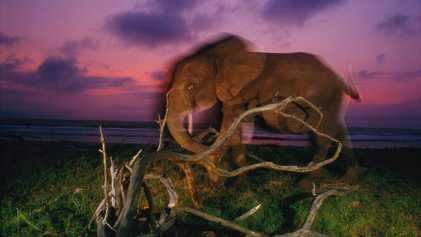 Las 21 fotos más cautivantes de National Geographic del siglo XXI