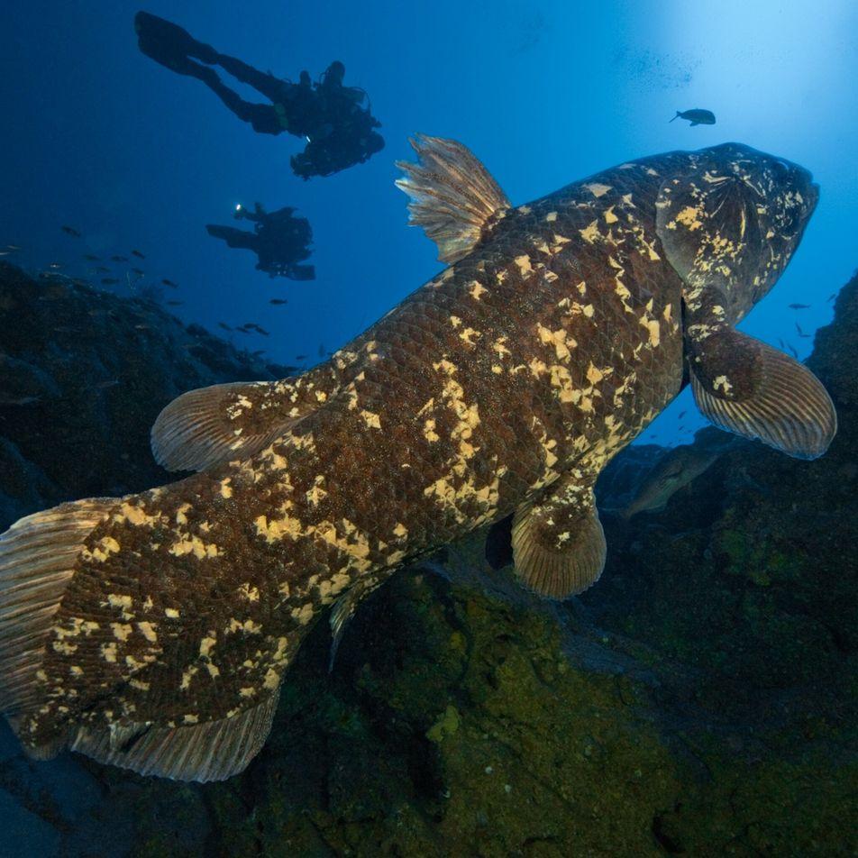 Conoce a estos peces primitivos de aguas profundas que viven hasta los 100 años
