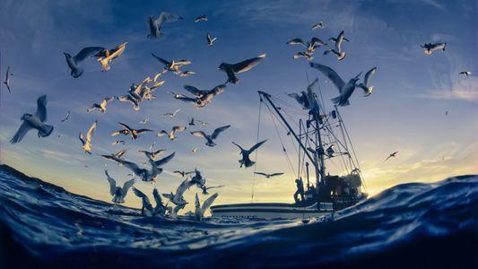 ¿Cómo podemos ayudar a los corales y a las aves marinas a sobrevivir al calentamiento global?