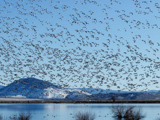 Migración de las aves: ¿en qué consiste esta gran maravilla de la naturaleza?