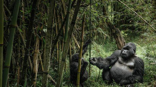 Estos animales son padres muy dedicados y realizan grandes esfuerzos por sus crías
