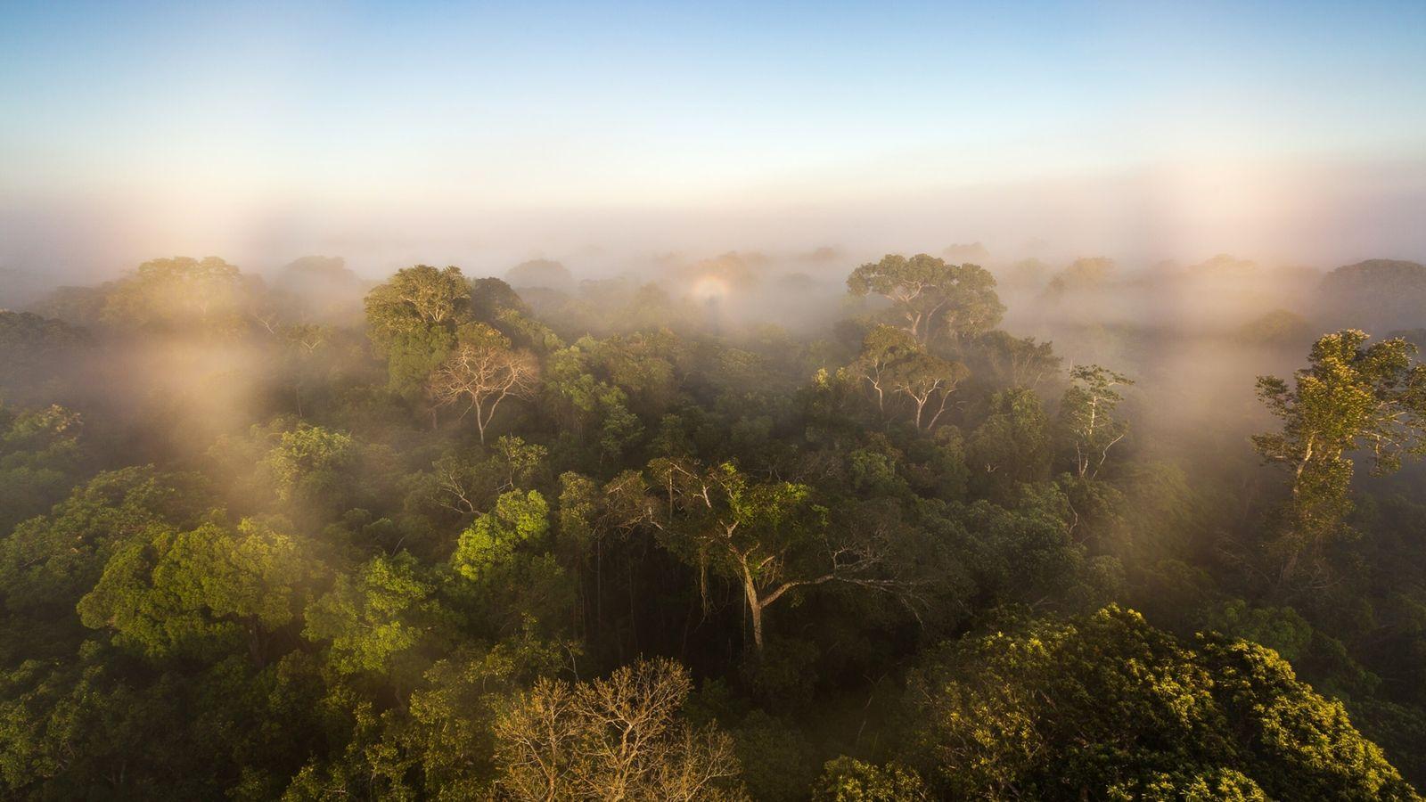 Según un nuevo estudio, la Amazonía ya no almacena carbono para nuestro planeta. Por el contrario, ...