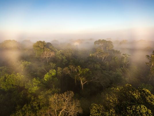 El primer estudio de los gases de efecto invernadero de la selva amazónica sugiere que están ...
