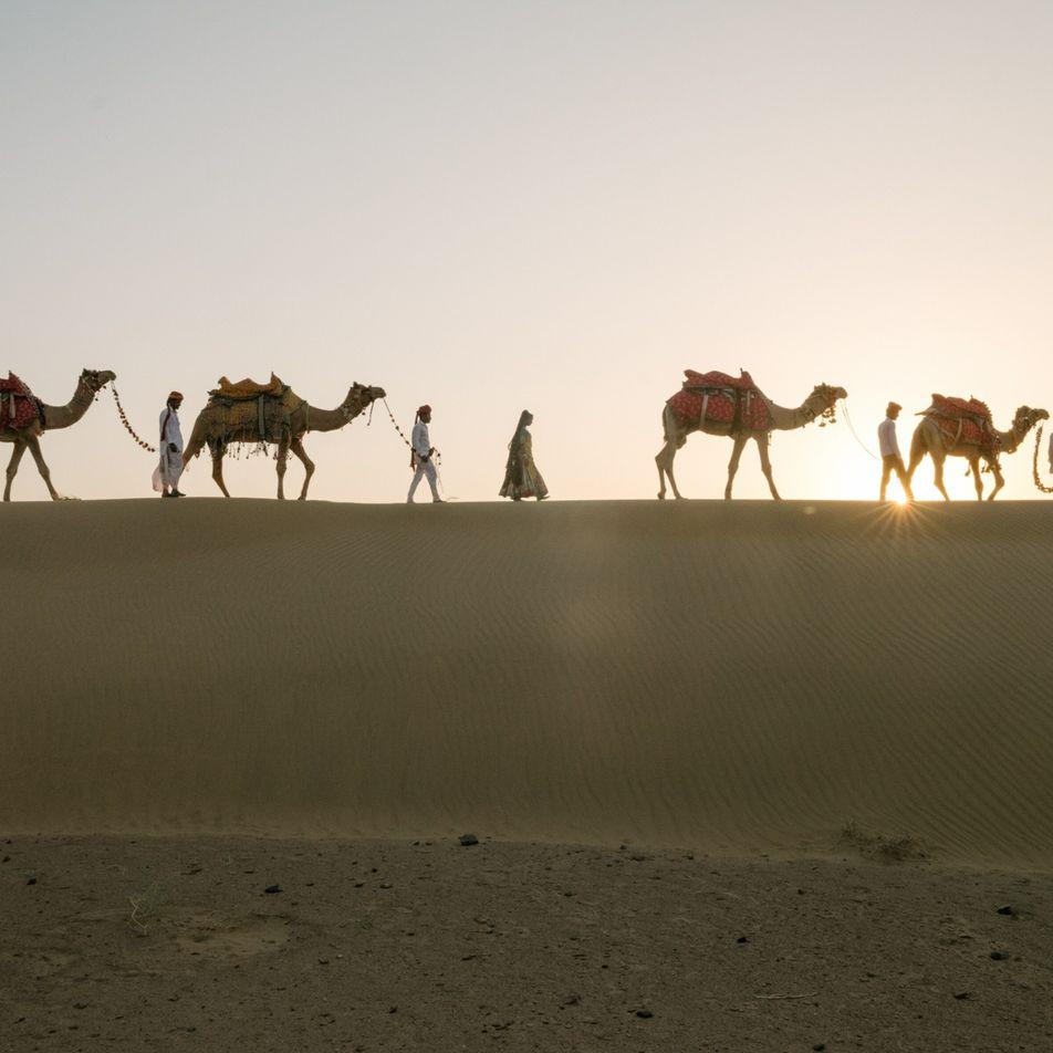 India: Los camellos están desapareciendo, y un pueblo lucha para preservar su antigua tradición de pastoreo