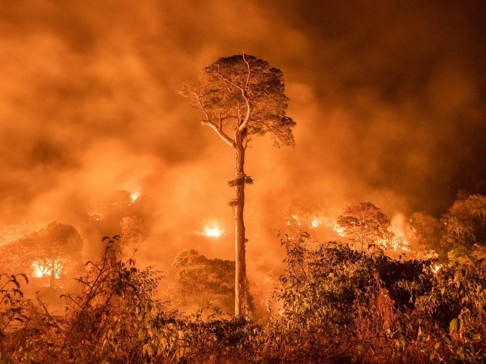 La selva amazónica se quema en Maranhão. Gracias a los incendios forestales y la deforestación descontrolada, ...