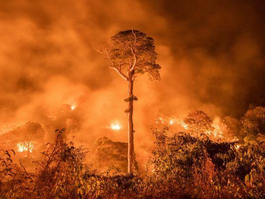 Los incendios y la deforestación están convirtiendo a la Amazonía en una fuente de carbono