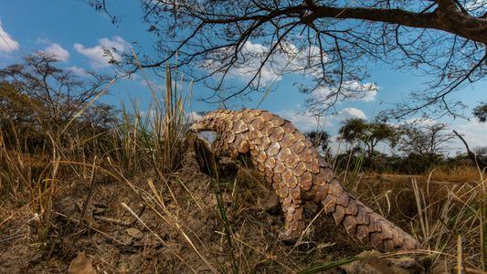 Se redujeron las incautaciones de fauna silvestre, pero podría incrementarse el tráfico ilegal