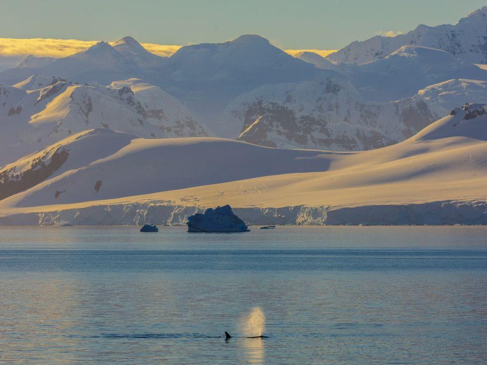Ballenas: La ciencia explica que no expulsan agua por los espiráculos y aclara otras ideas erróneas ...