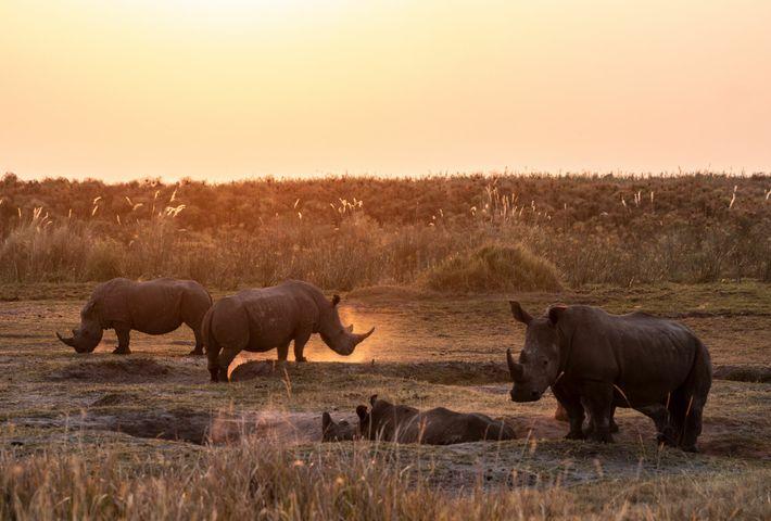 La licencia de ReconAfrica abarca los territorios de al menos cuatro animales en peligro crítico de ...