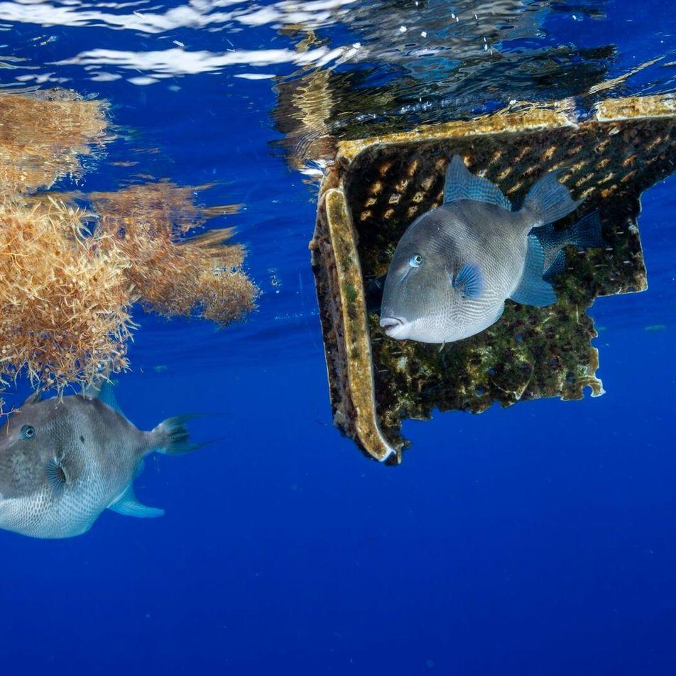 La ingesta de plástico fue registrada en más de 1.500 especies