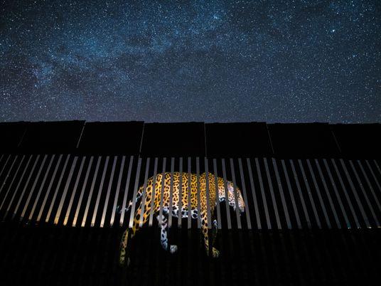 El avistamiento de un nuevo jaguar cerca de la frontera entre México y Estados Unidos le ...