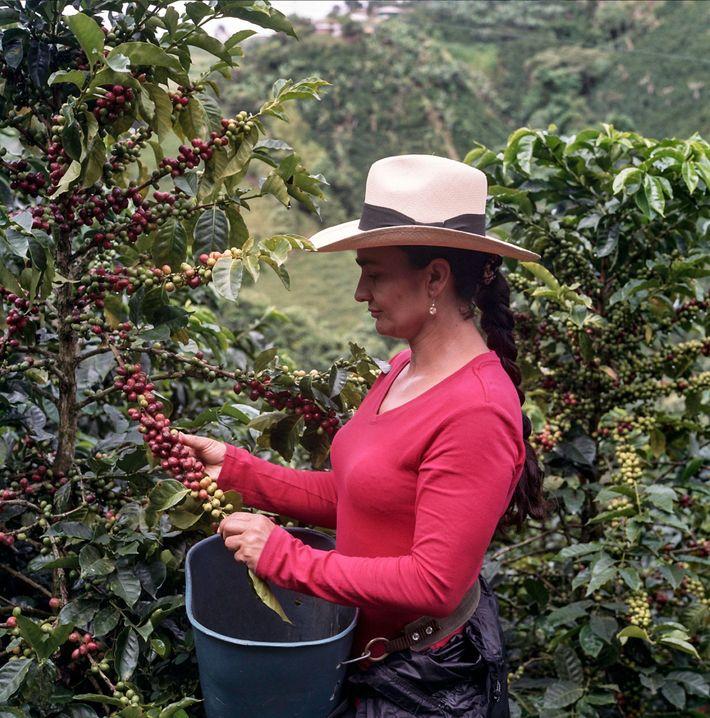 Alba María, la matriarca de una familia que por generaciones se ha dedicado al cultivo del ...