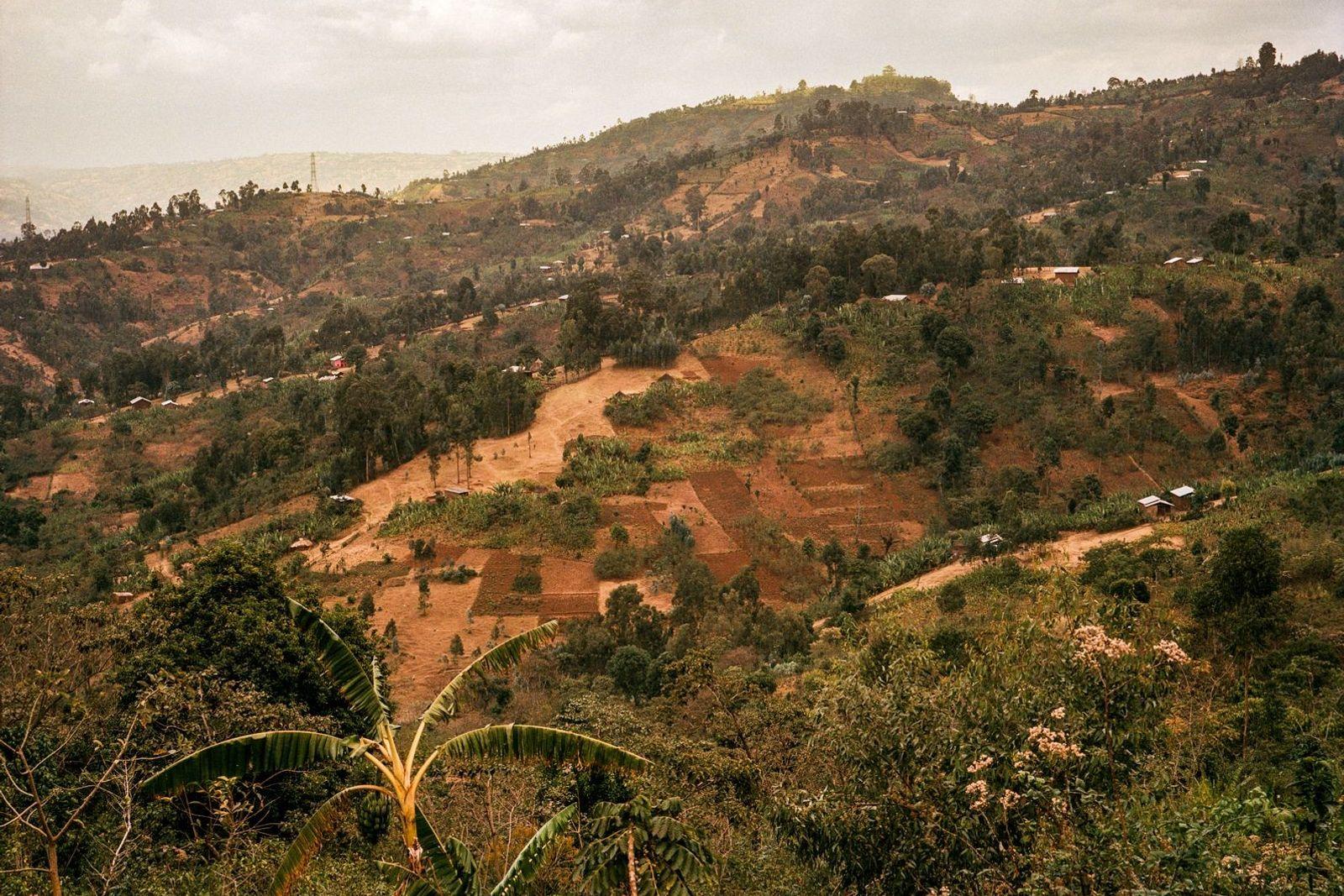 Etiopía, lugar en el que el cultivo del café se ha practicado y perfeccionado durante siglos, ...