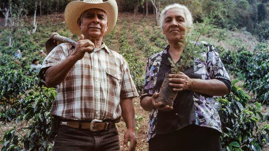 Como parte de su formación, tanto los habitantes de la localidad como los agricultores plantan árboles ...