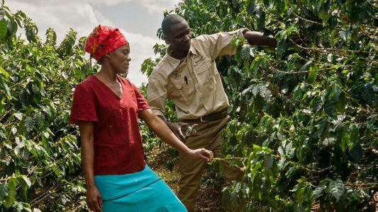 La educación revitaliza las fincas de café de Zimbabue