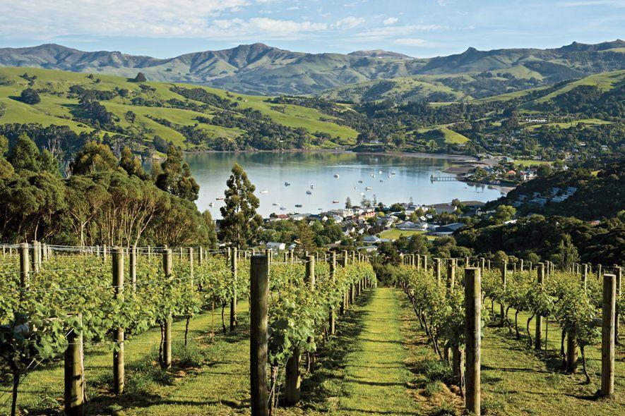 Viñas crecen cerca del pueblo de Akaroa en la península de Banks de la isla Sur ...