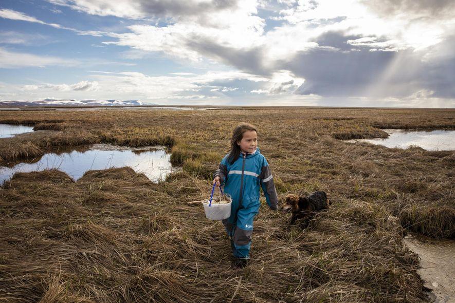 Kaliegh Charles recoge huevos de ganso con su familia en el Ninglick. Las prácticas de subsistencia ...