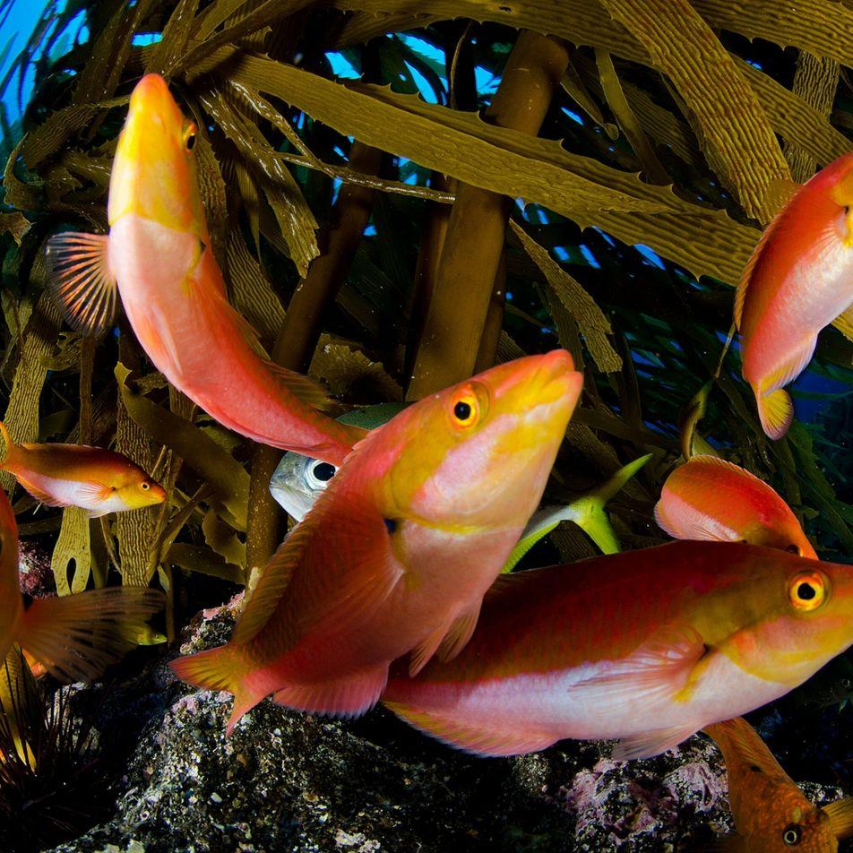Protección urgente para los océanos: presentan un nuevo proyecto que podría ayudar a los países a ...