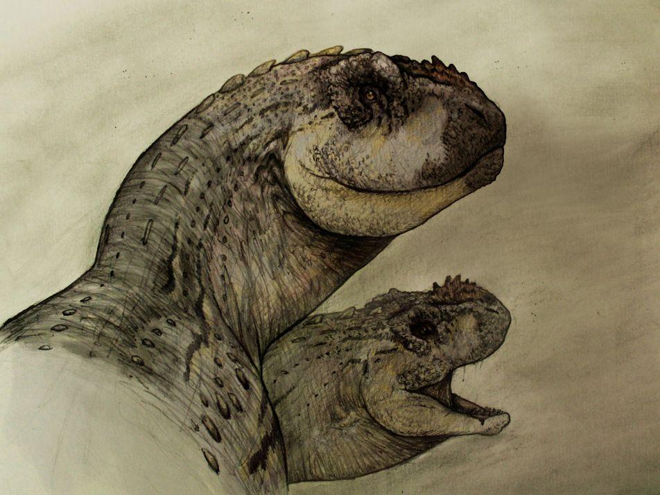 Argentina: descubren una nueva especie de dinosaurio carnívoro que fue más pequeña que sus parientes cercanos