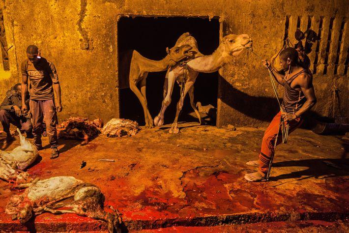 Los compradores eligen animales en el mercado de ganado y los mandan a este matadero de ...