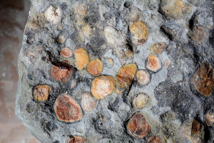 El contenido estomacal delBorealopeltaincluía unas piedras que ingirió el dinosaurio para favorecer la digestión, llamadas gastrolitos.