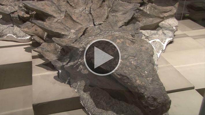 El fósil de dinosaurio mejor conservado