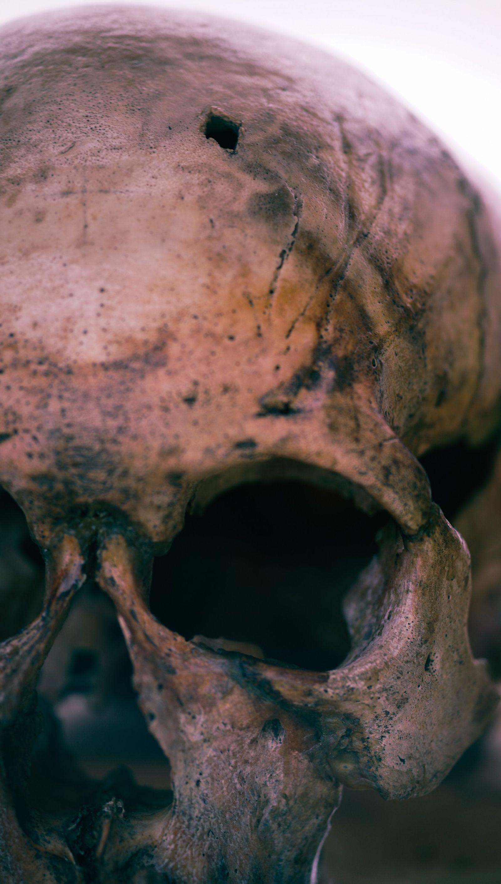 Las marcas de violencia en estos restos óseos revelan la caída de un antiguo imperio nómada