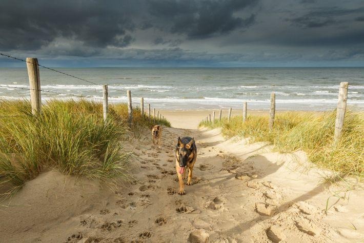 Noordwijk Beach, Países Bajos