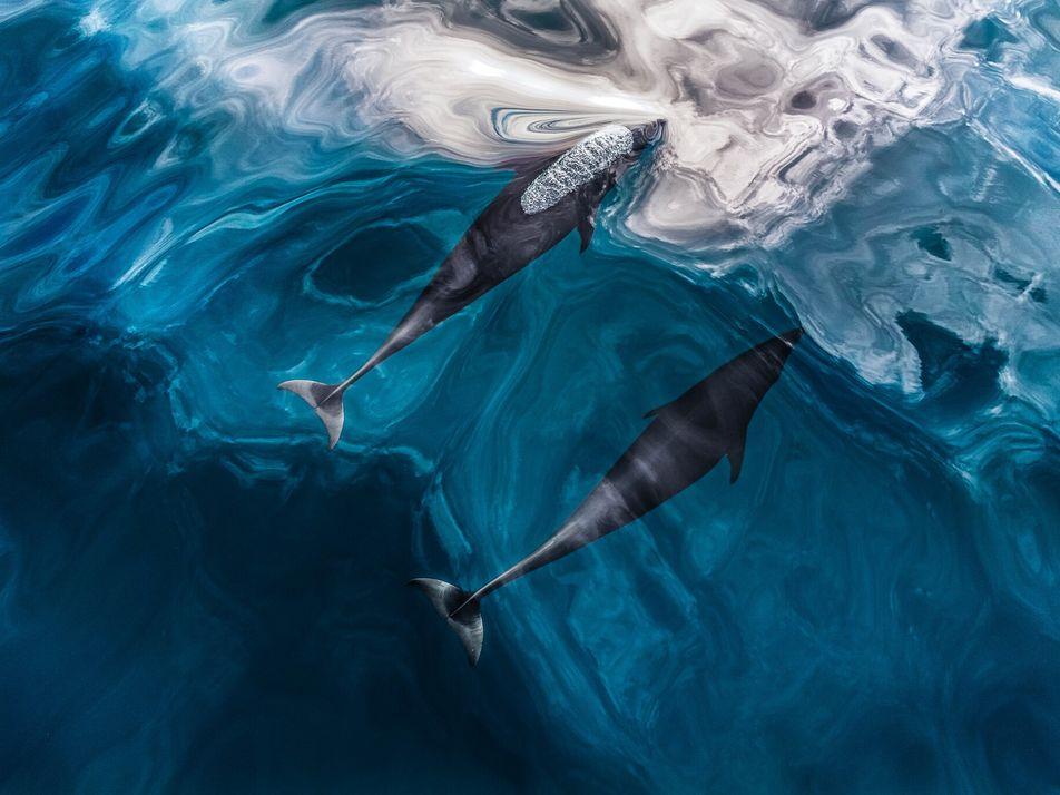 Ecolocalización: ¿en qué consiste el sistema de sonar de la naturaleza?