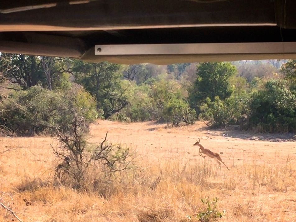 ¿Puedes ver al leopardo antes de que su presa lo haga?