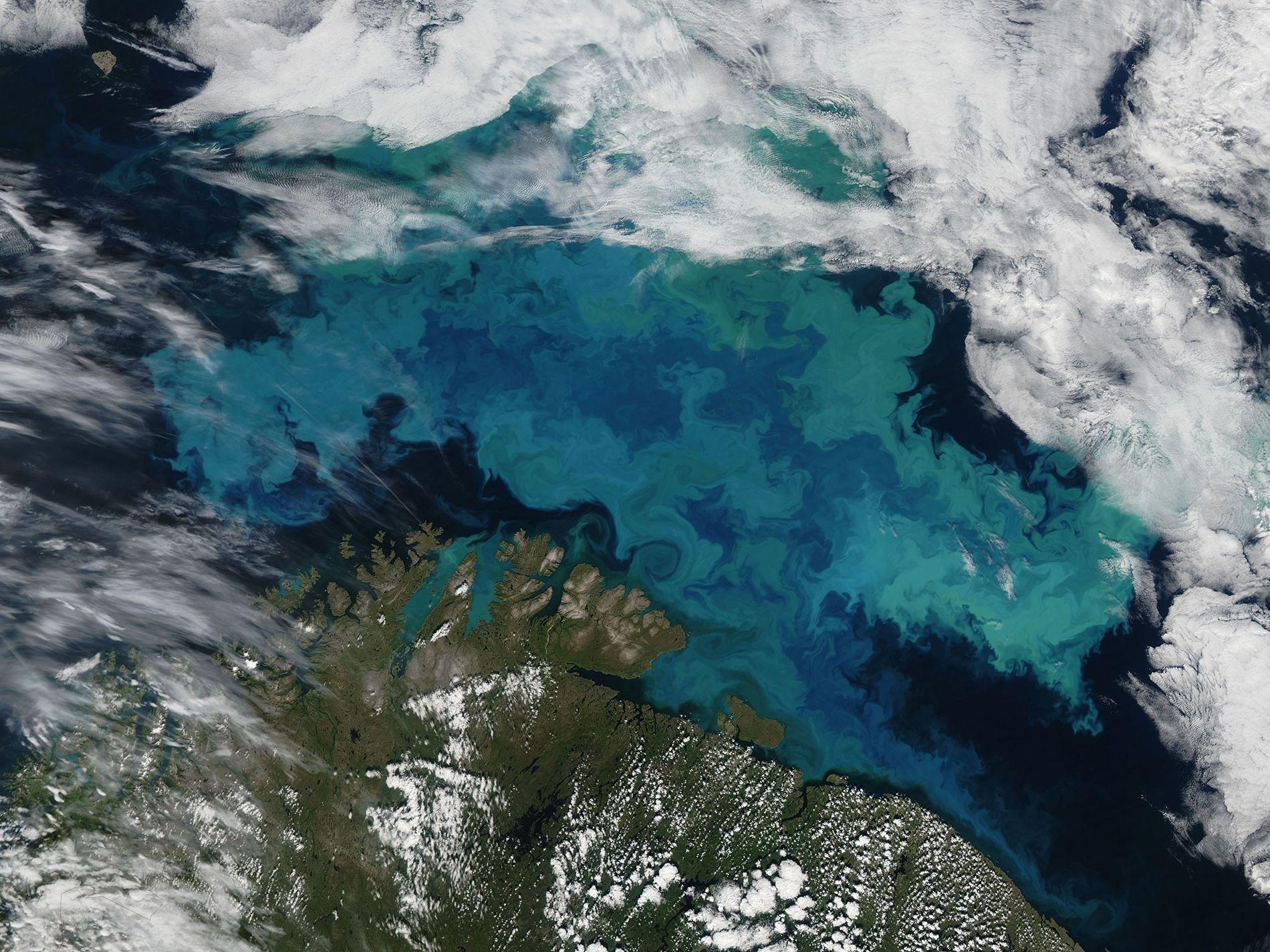 Una proliferación de fitoplancton en el mar de Barents el 14 de agosto de 2019. El ...