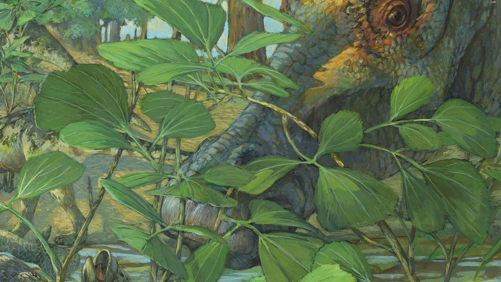 Hace más de 70 millones de años en lo que ahora es Montana, el hadrosaurio herbívoro ...