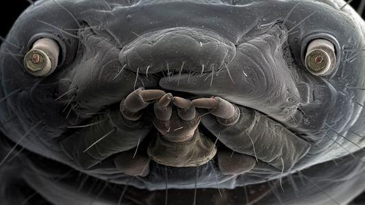 Adéntrate en el extraordinario mundo de la vida microscópica